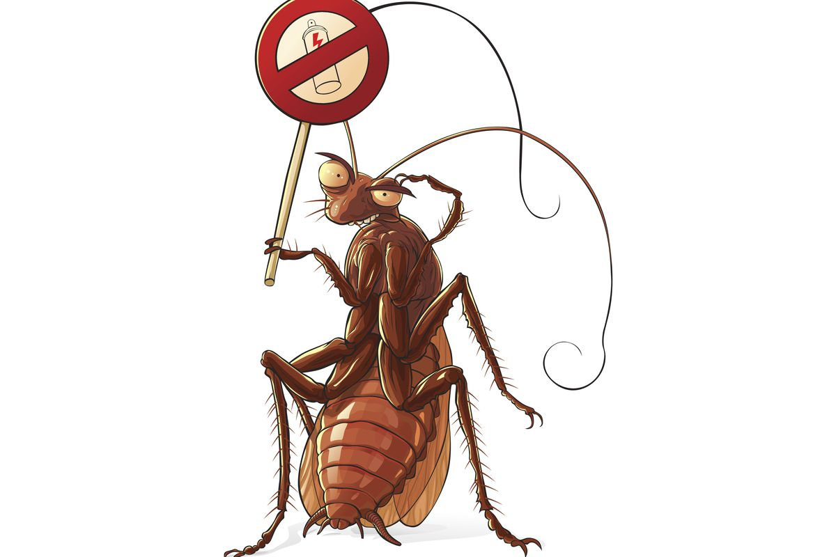 cockroach extermination service